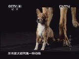 [子宫日记]犬类近亲交配