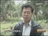 陈东灿豚鼠养殖生财有道,小豚鼠大财富