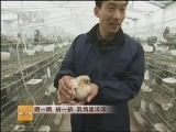 乳鸽养殖技术科技苑,晒一晒 挤一挤 乳鸽喜洋洋