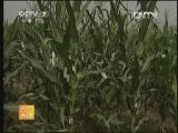 东北地区适用玉米品种
