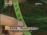 创业人物张庆涛韭菜种植致富经