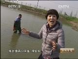生财有道,苏文达的有机甲鱼