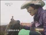 王丽马犬养殖生财有道,美女与马犬
