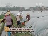 刘治海种植辣椒致富经