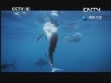 《生命》 20130612 旗鱼