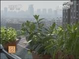 [每日农经]种在阳台 果蔬引人注目(20130614)