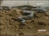 [生财有道]年入千万的神秘蛇王(20130902)