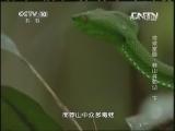 《地理中国》 20130908 地球家园-莽山寻蛇记 下