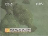 农广天地,牙鲆鱼养殖技术