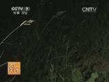 [农广天地]农用杀虫灯(20131216)