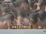 黄祖东养猪致富经,养猪十年 只赚不赔