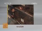 农广天地,狮子兔养殖技术
