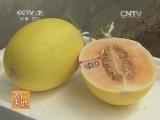 [农广天地]IVF117厚皮甜瓜日光温室栽培技术(20140310)