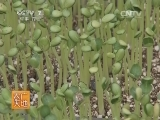[农广天地]宝冠西瓜栽培技术(20140317)