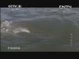 [食品技术]科尔潟湖捕捞蛤蜊
