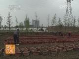 [农广天地]碗莲的种植与配饰(20140407)