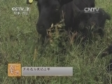 [农广天地]美姑山羊养殖技术(20140429)