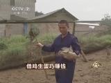 杨希林养鸡致富经,借鸡生蛋巧赚钱