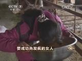 许江秀养牛致富经,要成功先发疯的女人(20140513)