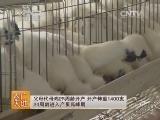 [农广天地]新兴竹丝鸡3号配套系养殖技术(20140513)