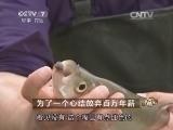 胡再明养鱼致富经,为了一个心结放弃百万年薪(20140514)
