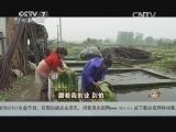 濮焕中种菜致富经,跟着我创业 别怕(20140529)