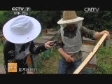 [科技苑]神奇的蜜蜂社会(20140619)