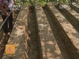 [农广天地]温室葡萄草莓立体栽培技术(20140630)