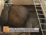 [农广天地]麝香鼠的养殖技术(20140702)