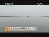 [每日农经]微山湖鲤鱼的赚钱之道(20140704)