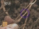 [农广天地]玉米茎腐病的防治(201400721)