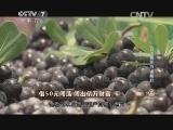 韩树人水果超市致富经,借50元闯荡 闯出亿万财富(20140725)