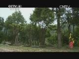 《寻找最美花园》 20140809 莞香园:深山奇香 千年香情