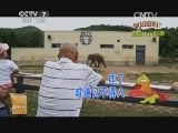 [科技苑]獐宝很值钱 獐子不好养(20140821)