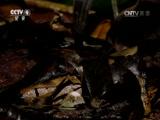 《自然》 20141006 地球脉动 第八集 富饶丛林