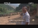 陈跃洲养鸟致富经,山坳里养古老大鸟的年轻人(20141008)