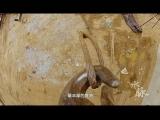 科教频道活动视频 大型文献纪录片《水脉》第六集《国宝新生》