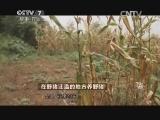 黄玉鹤特色养殖致富经,在野猪泛滥的地方养野猪(20141022)