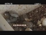 张光宋养龟致富经,珍稀龟的财富真相(20141111)