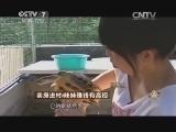 刘君凤养鸡致富经,卖房进村 辣妹赚钱有高招(20141216)