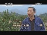 冯仁方橘子致富经,爸爸赔钱 儿子帮您赚(20141225)