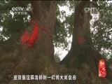 《记住乡愁 第一季》 20150123 第二十三集 杨佳堂村——修仁心行义事