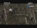 [美丽中国]滇金丝猴 片段
