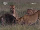 《生命》第三集 哺乳动物 00:47:11