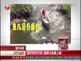 意外收获 男子河中行舟 成群大鱼跳上船