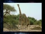 [自然传奇]终极动物倒计时第三集预告片