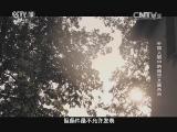 [探索发现]外国人眼中的南京大屠杀(四) 尘封已久的《拉贝日记》再次打开