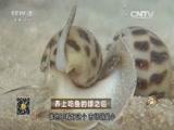 杨猛养螺致富经,养上吃鱼的螺之后