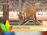 """盘点动物界的""""奥运明星"""""""