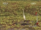 《动物世界》 20160713 河马王国奇案